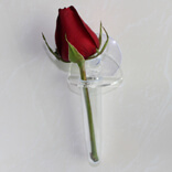Suction cup with Acrylic Flower Vase